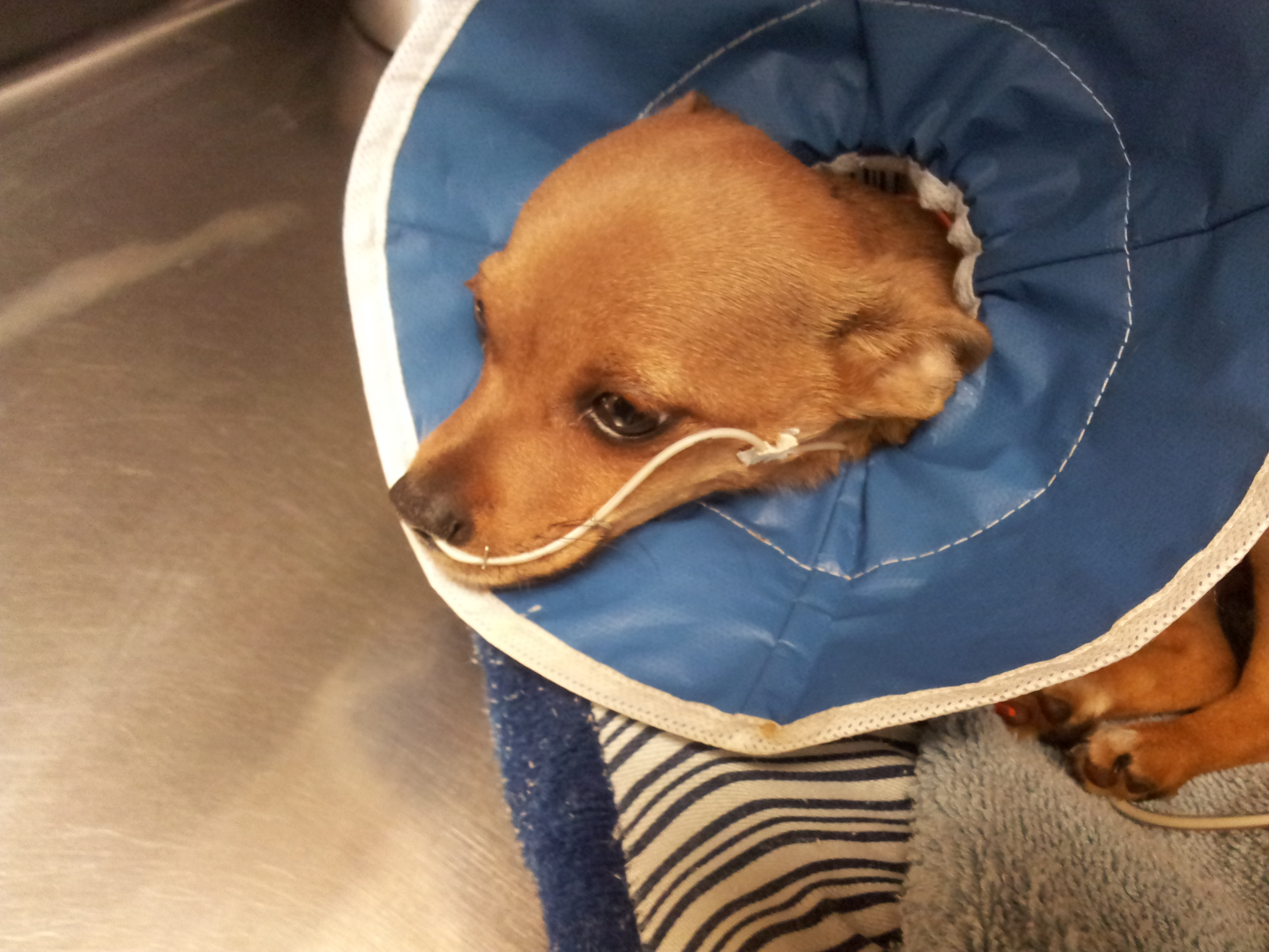 Reasons Why Your Parvo Patients Should Be Fed Right Away
