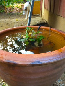eco pot pond