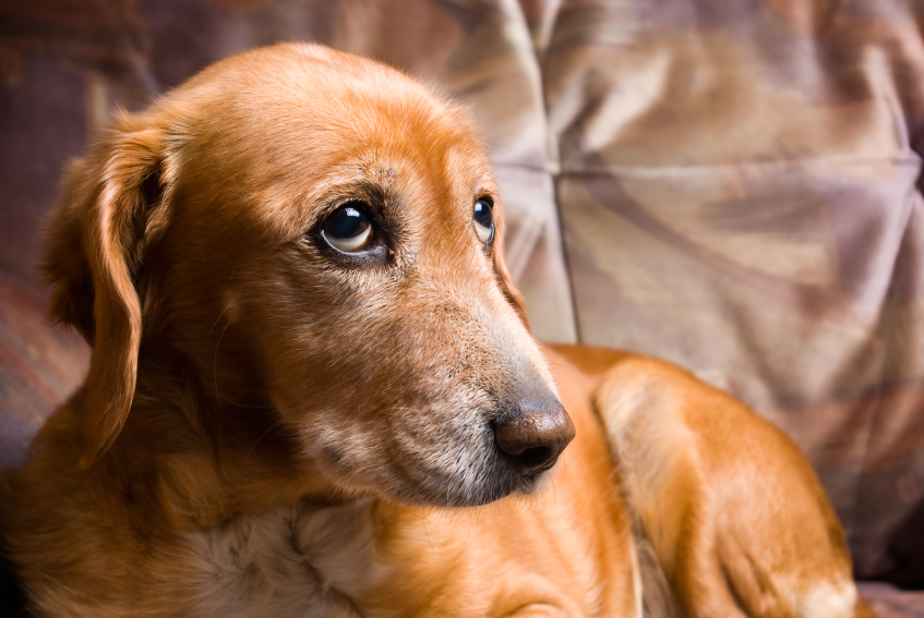 Taking Great Pains to Alleviate Pet Pain
